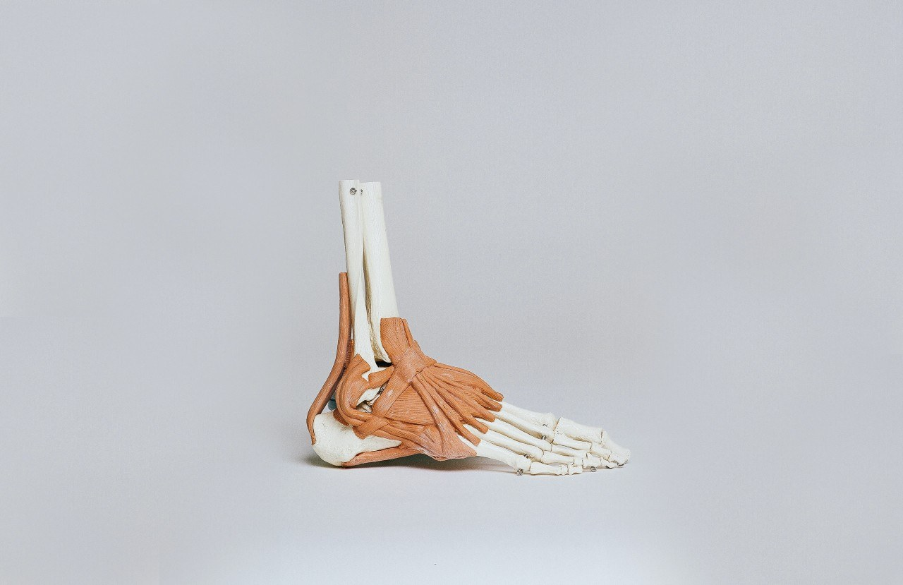 foot structure and analysis